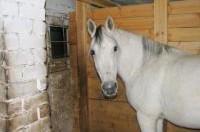 Лагерь верховой езды Horse Paradise