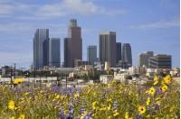 Языковой лагерь в Лос-Анджелесе