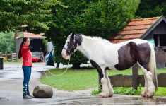 "Equestrian Camp for girls ""Osnabruck"" with possibility of studing English or German languages"