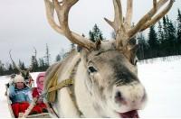Браво-Зима в Лапландии