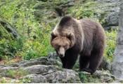 """OSI.По следу пиренейского медведя. Миссия """"Око"""""""